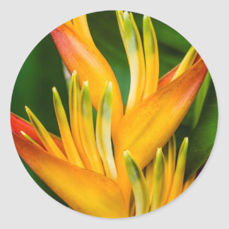 Heliconia Bird of Paradise Flower Photography Classic Round Sticker