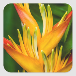 Heliconia Bird of Paradise Flower Photography Square Sticker