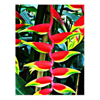 Heliconia Postcard