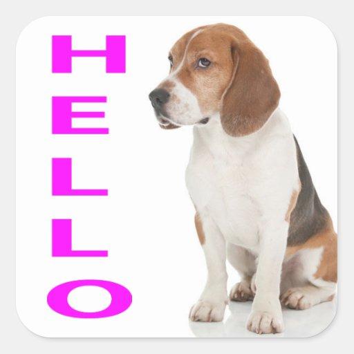 Hello Beagle Puppy Dog Greeting Stickers / Label