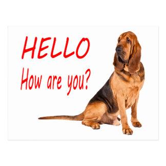Hello Bloodhound Puppy Dog Blank Greeting Postcard