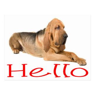 Hello Bloodhound Puppy Dog Greeting Post Card