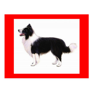 Hello Border Collie Puppy Dog Greeting Post Card