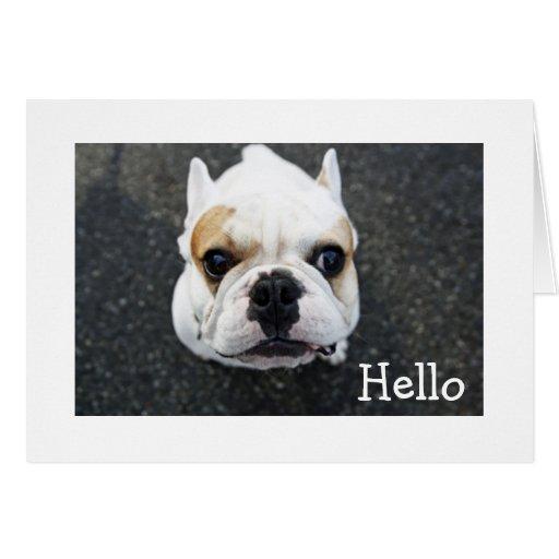Hello  Bulldog Greeting Card - Verse