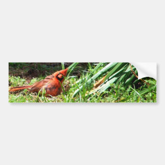Hello Cardinal Bumper Sticker