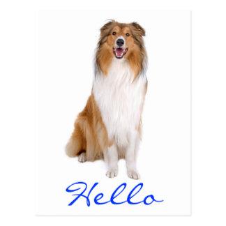 Hello Collie Puppy Dog Greeting Postcard