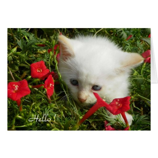 Hello ! Cute Lovely Kitty, Greeting Card