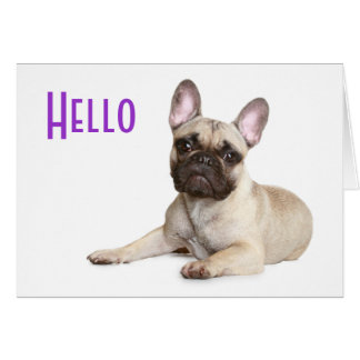 Hello French Bulldog Puppy Dog Greeting Postcard