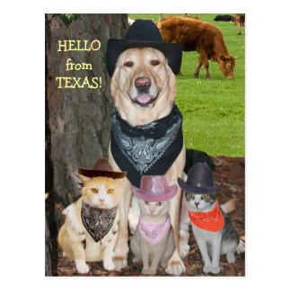 Hello from Texas! Postcard