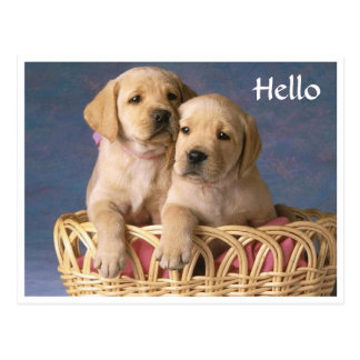 Hello Labrador Retriever Puppy Greeting Post Card