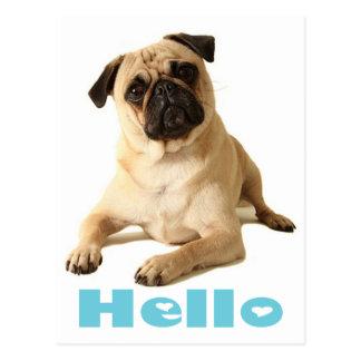 Hello Pug Puppy Dog Greeting Postcard