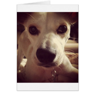 Hello Puppy Greeting Card