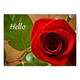 Hello Rose Greeting Greeting Card
