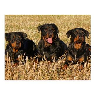 Hello Rottweiler Puppy Dog Greeting Postcard