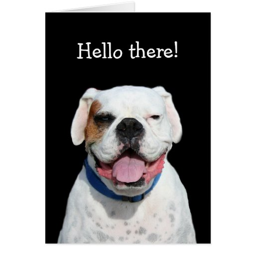 Hello there white boxer greeting card