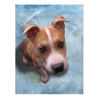 Hemi the Pit Bull Puppy Postcard