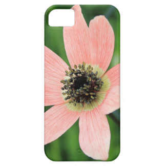 Hepaticas Anemone iPhone 5 Case