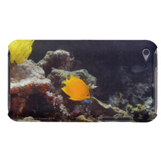 Herald's angelfish (Centropyge heraldi) swimming Barely There iPod Cover