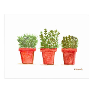 Herbs thyme rosemary mint postcard