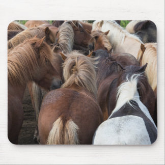 Herd of Icelandic horse Mouse Pad
