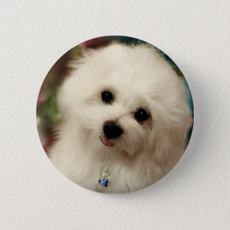 Hermes the Maltese 6 Cm Round Badge