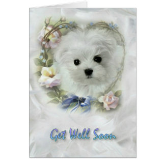 Hermes the Maltese Get Well Soon Card