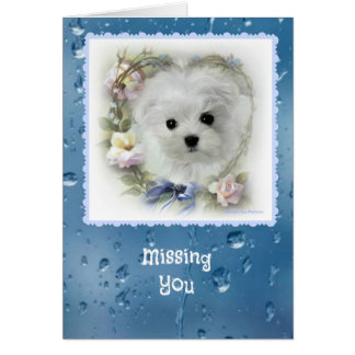 Hermes the Maltese 'Missing You' Greeting Card