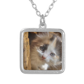 Heterochromia Calico Kitten Silver Plated Necklace
