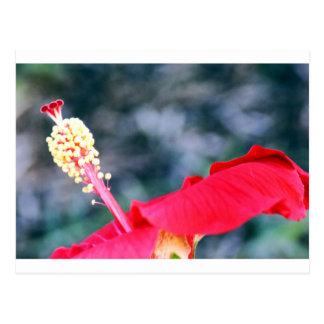 Hibiscus 4 postcards