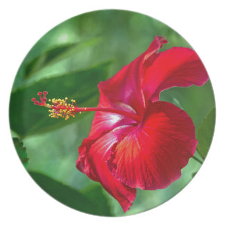 Hibiscus Blossom Plate
