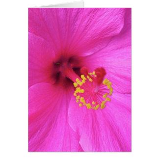 Hibiscus in Magenta Card