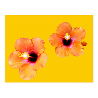 Hibiscus Orange Gold bg The MUSEUM Zazzle Gifts Post Cards