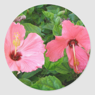 Hibiscus Stickers