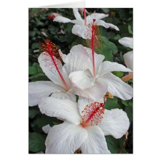 Hibiscus Trinity Card