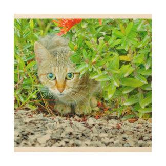 Hidden Domestic Cat with Alert Expression Wood Wall Art