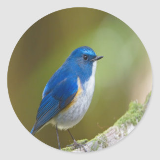 Himalayan Bluetail enjoy peace calm Classic Round Sticker