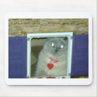 Himalayan Cat Kitty Hat, tee, mousepad, gift, cute