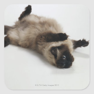Himalayan Cat Lying on his Back Square Sticker