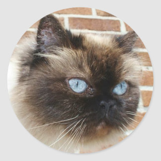 Himalayan cat photo with blue eyes classic round sticker
