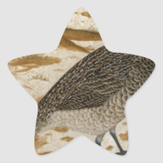 Himalayan cheer pheasant by Ustad Mansur Star Sticker