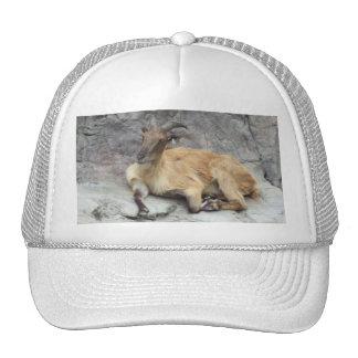 Himalayan Tahr Hat