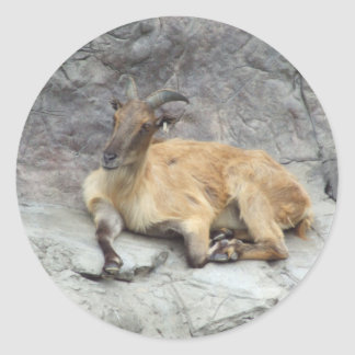 Himalayan Tahr Sticker