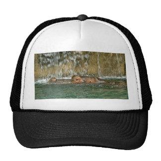 Hippo Waterfall Cap