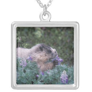 Hoary marmot feeding on silky lupine, Exit Silver Plated Necklace