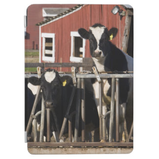 Holsteins at Boggy Meadow Farm in Walpole, New iPad Air Cover