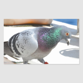 Homing Pigeon On A Yacht Rectangular Sticker