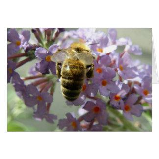 Honeybee and Buddleia Flowers Greeting Card