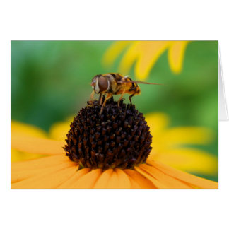 Honeybee at the Center of Attention Card