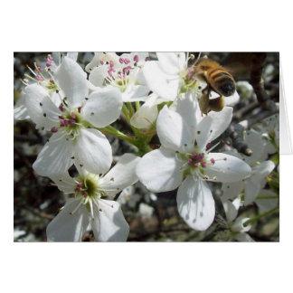Honeybee Card