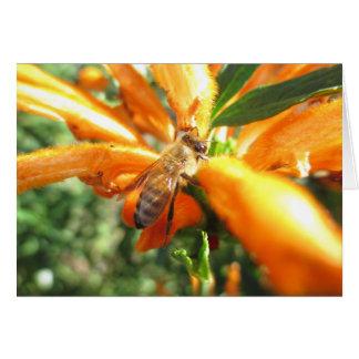 Honeybee on Lion's Tail Flower Blank Card